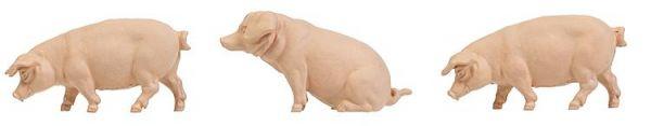 3 Schweine